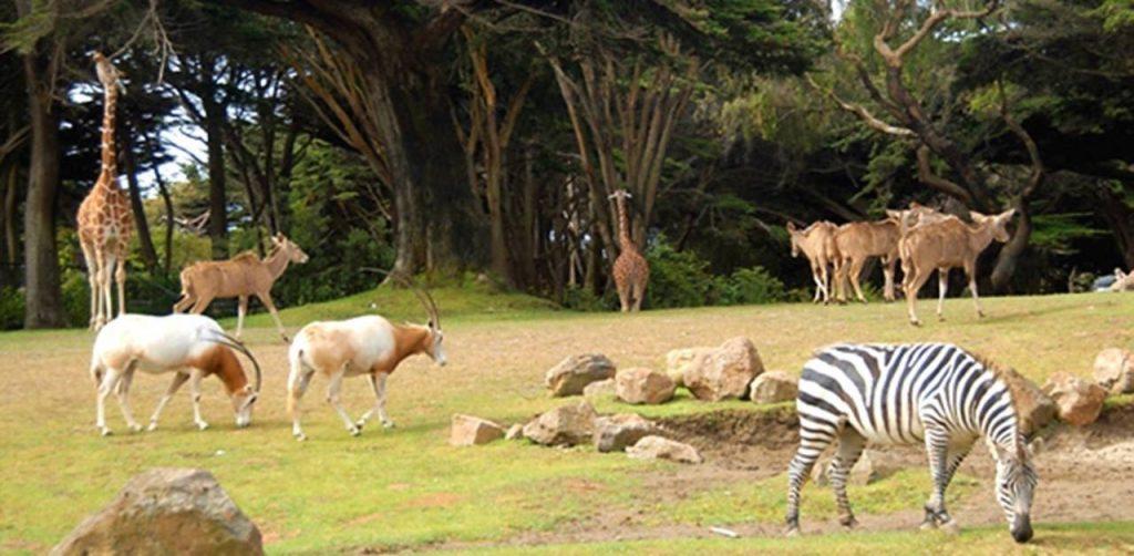 4. Zoo de SF